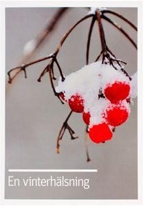 Bild på Vykort- Vinterhälsning rönnbär