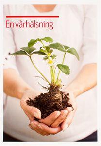Bild på Vykort- Vårhälsningsmultronplanta